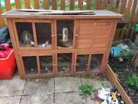 Lop rabbit and double hutch