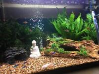 Fully set up Fish tank