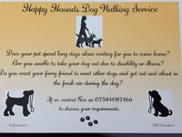 Happy Hounds Dog Walking Service - Offers group or single dog walks around Dover, Deal and Sandwich