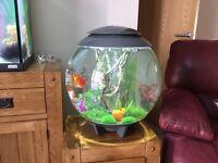 Biorb 60ltr fish tank
