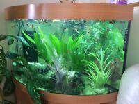 Beautiful Aquarium whit fish for sell