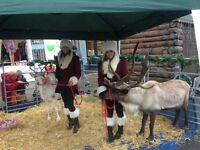 Yard Staff for Horses, Reindeer, Exotics Required Three Months