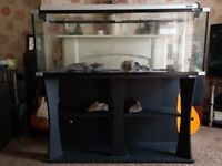 Aqua One 4 foot aquarium & stand