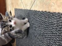 3 Gorgeous Kittens- UPDATED pls read description