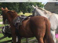 "16"" medium brown leather saddle"