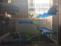 Gerbils with cage for sale (Brown & Black)