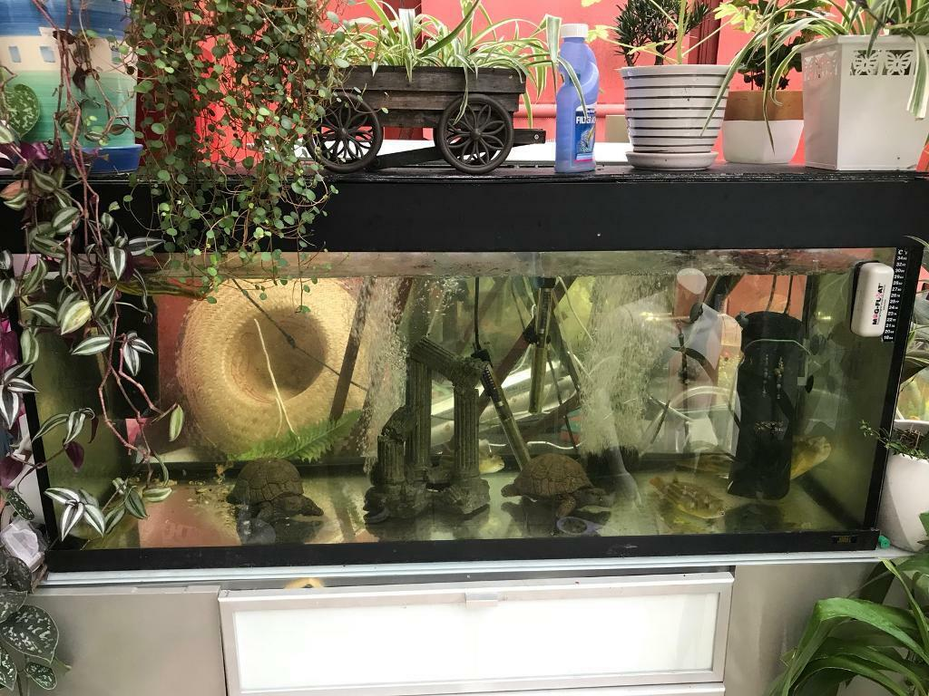 4ft fish tank with lid and light