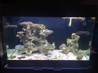Fish tank marine (Red Sea max 250) with sump