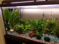 185 l fish tank