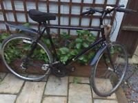 "Men's 23"" Pegasus hybrid bike bicycle. Delivery & D lock available"