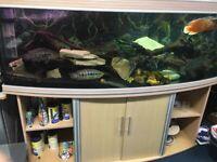 6ft Fish tank and fish- £370