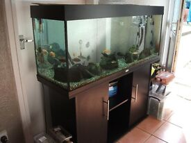 Ready for collection aquarium juwel rio 240 with cabinet etc