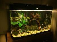 Fish Tank Aquarium Fluval U4 filter