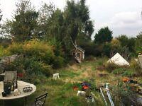 Only £95 pw! Double bedroom, forest views. E Croydon. Garden, Steinway, table tennis, art studio