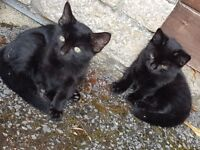 Adorable kittens for Sale - Ready for homes now