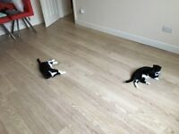 Two black and white cats, brilliant pets