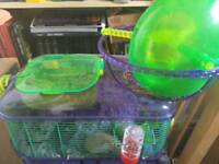 Pair of friendly gerbils with cage
