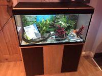 Fluval Roma 2003ft fish tank setup