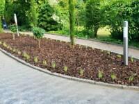 Darmstädter Gartenpflege und Hausmeisterservice Hessen - Darmstadt Vorschau
