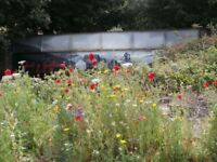 WANTED WILDFLOWER SEEDS OR FLOWER SEEDS