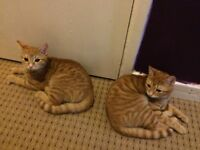 SELLING 2 FEMALE CATS