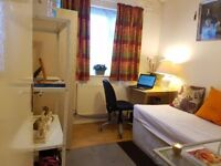 Very nice large single room for rent at Gantshill