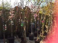 Magnificent, Beautiful Gorgeous Trees! Lovely and Established. Loads of new ones