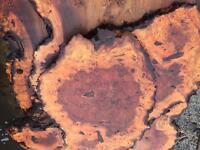Oak ash elm planked timber