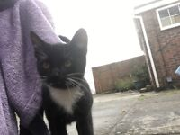 Male black&white kitten for sale, 5 months old. Worm and flea treated.