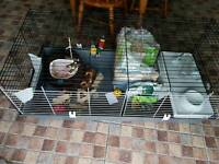 Rabbit cage with set