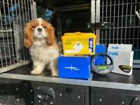 Pet Microchipping - dog/kitten/rabbit