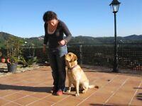 Dog training and puppy socialisation