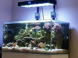 Marine full spectrum led