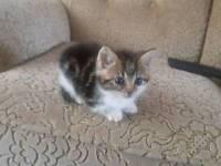 Three Littele Kittens