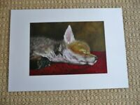 Art Print of Orphaned Rescued Fox Cub entitled Moment of Serenity on 200gsm Colotech Paper Gift Idea