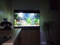 aquael glossy 125 lt aquarium