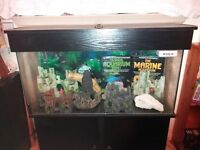Massive Aquatic Collection - 3ft Tank & everything you could need.
