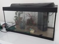 Tetra Starter Line LED 54 Litre Aquarium Set with ornoments stones filter thermometers