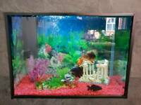 Fish tank with fish and everything