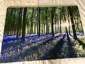 Large canvas, bluebell landscape