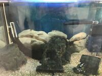 Fish tank inc 4x fish - all included including cabinet, tank & accessories