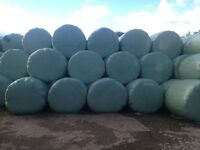 Round bales of haylage