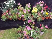 40 assorted plants and flowers bundle