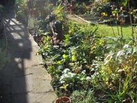 Large Variety of Garden Plants. All Come Up Every Year And All In Large Pots