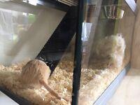 2 male friendly male gerbils and terrarium