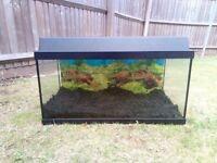 Juwel 60L fish tank
