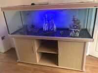 Fish tank 6ft x 2ft x 2ft