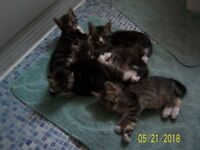 Six sweet kittens