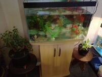 73 litre/2ft Fish tank with cabinet stand and equipment