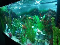 Variety of tropical fish
